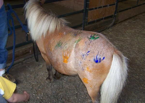 Ponny