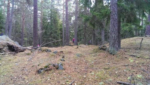 skogsmatning