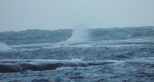 grosshamn_havet
