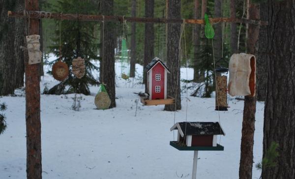 Talltita vid fågelmatningen Gäddviksundsvägen